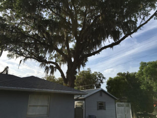 tree services tree removal Inverness, Lecanto, and Hernando, FL